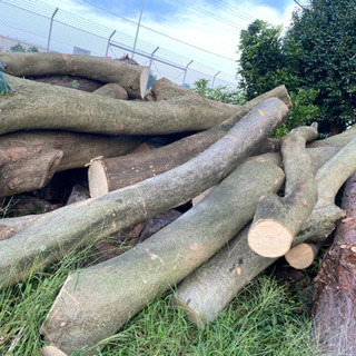 丸太 薪 伐採木 差し上げます