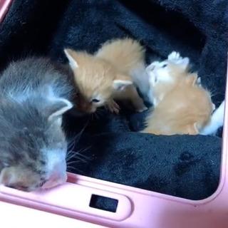仔猫たちの里親になってください