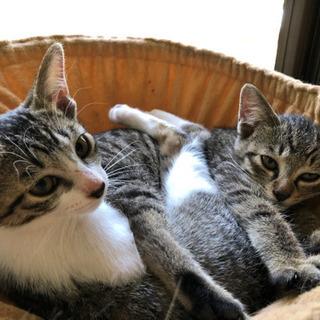 子猫2匹同時募集します! 母猫と子猫1匹は譲渡先が決まりました。