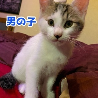 生後3ヶ月目の子猫ちゃん!緊急!