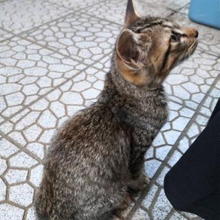 人懐っこい猫さんです