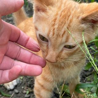 子猫の里親募集ちゃトラ 『決定』