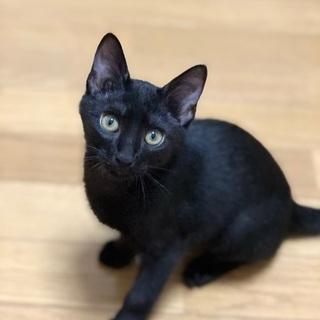 生後3ヶ月の黒猫君