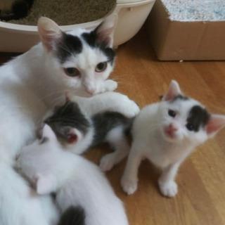 しっかり者の優しいお母さん猫