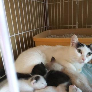 しっかり者の優しいお母さん猫 - 名古屋市