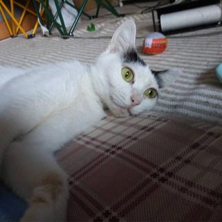 しっかり者の優しいお母さん猫 − 愛知県