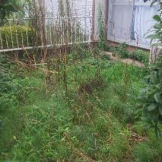 草むしりと草刈り作業!