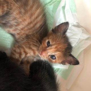 2ヶ月ちいさな子猫さん4ひき^ω^)