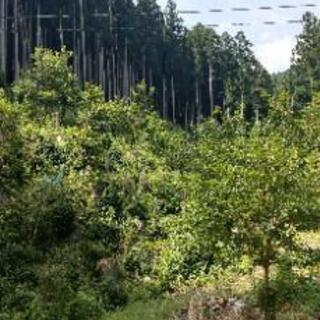三重県☆非課税3筆土地セット🏞
