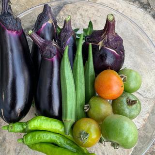じゃがいもと夏野菜のセット(3)