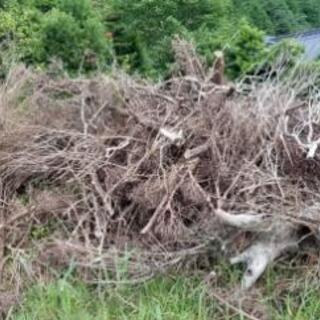 庭木 伐採済み 取りに来て頂ける方募集です。