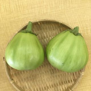 幻の埼玉青茄子