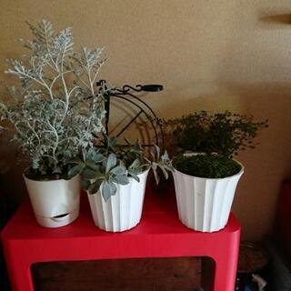 観葉植物4種(他にも有り) プラ鉢・缶植え