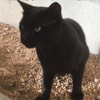 魔女の宅急便のジジの様な黒猫ちゃん