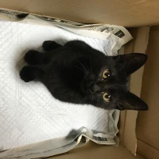 南島原市有家町,おそらく生後5ヶ月程度の黒猫ちゃんです。