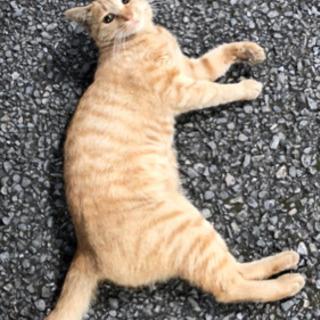 猫ちゃんを助けてください!里親募集