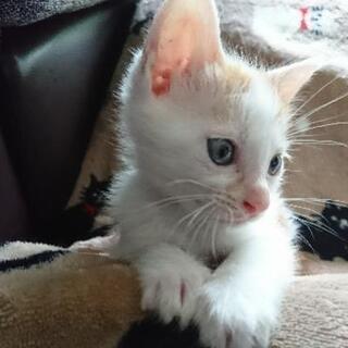 生後2ヶ月仔猫3匹やんちゃで人懐こい✨