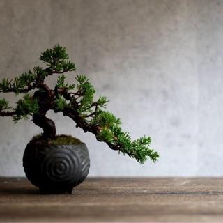 現代インテリアにあうモダン盆栽教室 〜樹形を楽しめる真柏盆栽〜