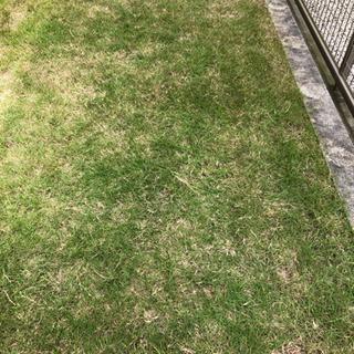 芝刈りいたします。知多半島の便利屋・おそうじ屋 ハートフル