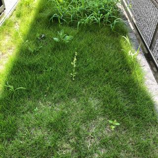 芝刈りいたします。知多半島の便利屋 ハートフル - 常滑市