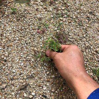 草むしりいたします。知多半島の便利屋・おそうじ屋 ハートフル - 常滑市