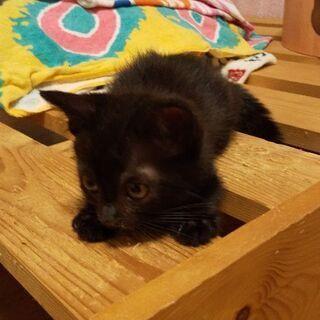 里親様決定。 黒猫    メス    1ヶ月   まっくろくろすけ似。