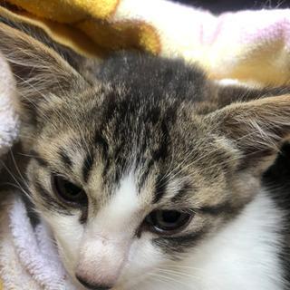 甘えん坊の3か月の子猫ちゃん