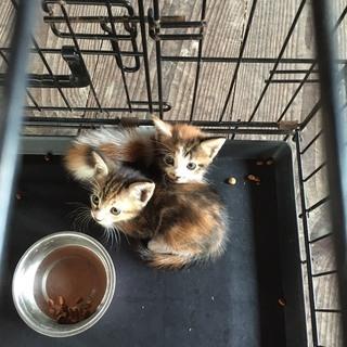 [里親様決まりました]保護猫2匹