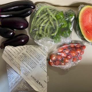 新鮮無農薬野菜 kokofarm