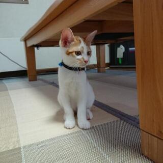 生後3ヶ月の仔猫、里親募集!