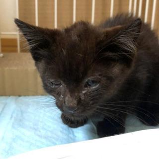 生後一ヶ月の黒猫