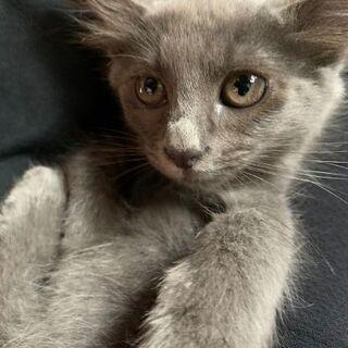 子猫!4匹の里親探してます。 − 茨城県