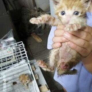 子猫達助けて下さい かわいいですよ