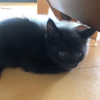 黒猫ちゃんの里親様再募集🌟