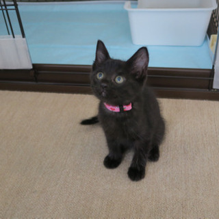 黒猫のモードちゃん - 羽村市