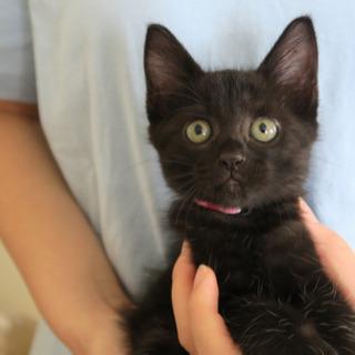 黒猫のモードちゃんの画像