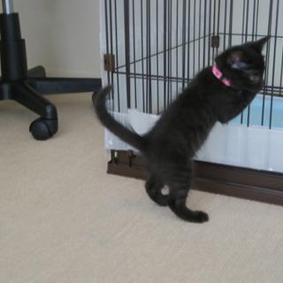 黒猫のモードちゃん − 東京都