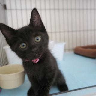 黒猫のモードちゃん - 猫