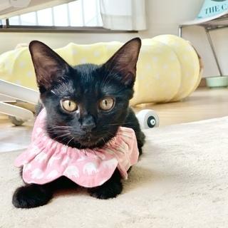 多頭飼育からレスキュー 元気いっぱい黒猫姉妹「アクビちゃん」