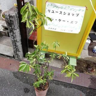 13植木鉢 10日迄に引取お願い致します