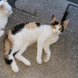 生後4ヶ月くらいの猫