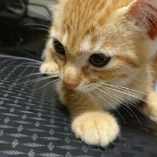 メス猫(生後4ヶ月頃)