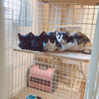 子猫4匹と母猫を保護しました。