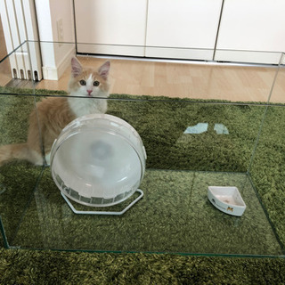 【美品】60×30×36 ガラス水槽(小動物用)+サイレントホイ...