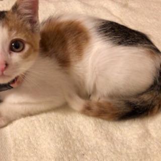 三毛猫の女の子の画像