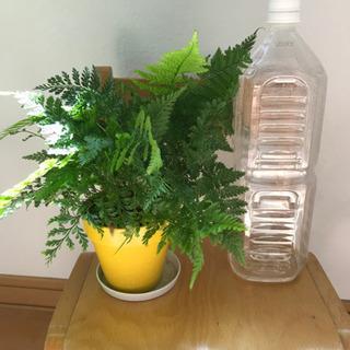 観葉植物 【お取引中】