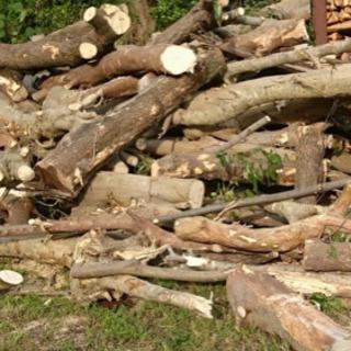 依頼多数!不要木の木の伐採・特殊伐採承ります!お安く致します!