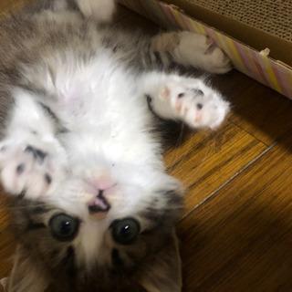 子猫 メス  - 猫