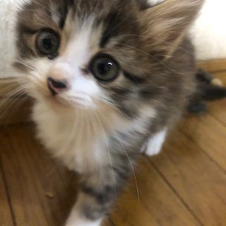子猫 メス  − 茨城県