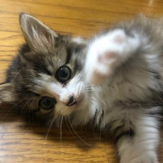 子猫 メス の画像